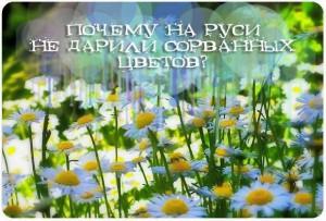 Почему на Руси не дарили сорванных цветов